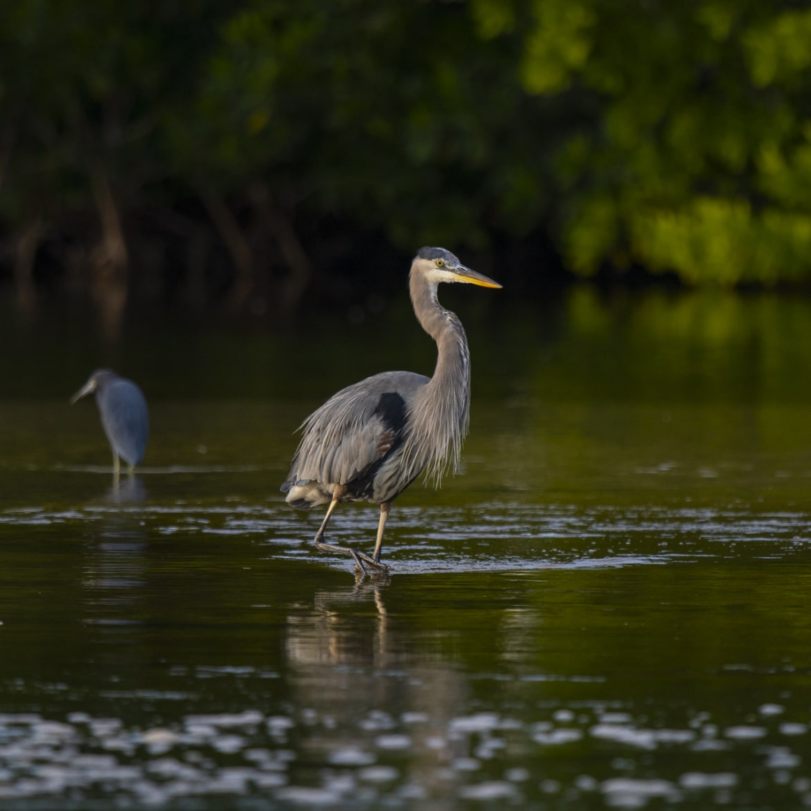 Ding Darling Bird on Sanibel Island